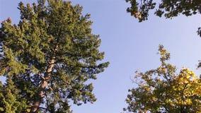 Otoño en el parque, los árboles y la hierba metrajes