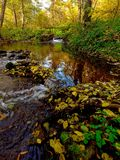 Otoño en el parque natural Bobrava Imagen de archivo libre de regalías