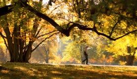 Otoño en el parque Olomouc de la ciudad Fotografía de archivo