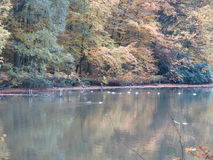 Otoño en Forest Surrounding un lago con los patos Imagenes de archivo