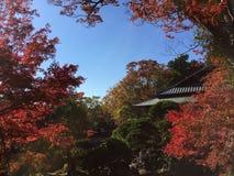 Otoño en Japón Foto de archivo