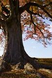 Otoño en Japón Imagen de archivo