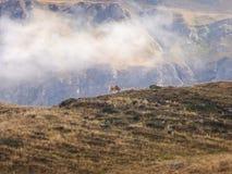 Otoño en la montaña Foto de archivo libre de regalías