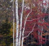 Otoño en las montañas blancas Fotos de archivo