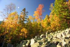 Otoño en las montañas rocosas Imagen de archivo