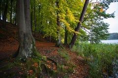 Otoño en las montañas y los bosques alemanes - algún mou alemán de la media Imagen de archivo