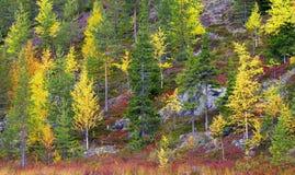 Otoño en montañas rocosas en Finlandia septentrional Imagen de archivo libre de regalías