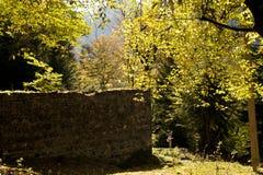 Otoño en parque Imagen de archivo libre de regalías