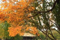 Otoño en parque chino imagenes de archivo