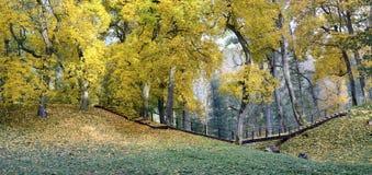 Otoño en un parque Foto de archivo libre de regalías
