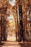 Otoño en un parque de oro Fotografía de archivo libre de regalías