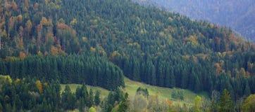 Otoño hermoso en el bosque Foto de archivo libre de regalías