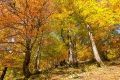 Otoño hermoso en las montañas bávaras Imagenes de archivo