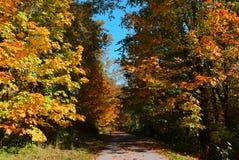 Otoño hermoso y colorido Un callejón con las hojas caidas Imagen de archivo libre de regalías