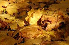 Otoño, hojas Imagen de archivo libre de regalías