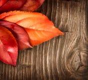 Otoño Hojas coloridas en un fondo de madera Imagen de archivo