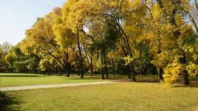 Otoño, hojas del árbol imagenes de archivo