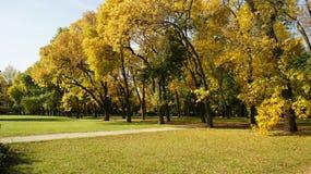 Otoño, hojas del árbol fotos de archivo libres de regalías
