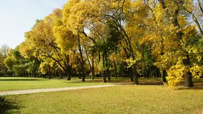 Otoño, hojas del árbol imagen de archivo libre de regalías