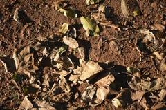 Otoño: hojas en mi jardín Fotos de archivo