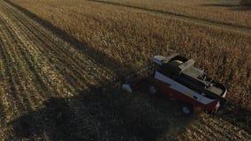 Otoño industrial que cosecha con la cosechadora moderna almacen de video