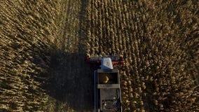 Otoño industrial que cosecha con la cosechadora moderna almacen de metraje de vídeo