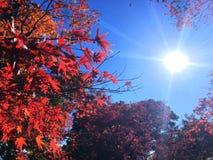 Otoño-Japón Fotografía de archivo