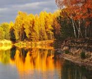 otoño la madera en el lago imagen de archivo libre de regalías