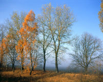 Otoño - las hojas del último en árboles Imagen de archivo libre de regalías