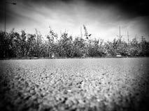 Otoño Mirada artística en blanco y negro fotografía de archivo