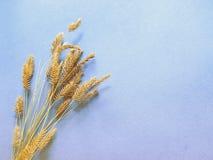 Otoño, oído en un fondo azul, decoración con la hierba Imagenes de archivo
