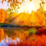 Otoño otoñal de la luz del sol del abedul del lago Fotos de archivo