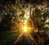 Otoño, parque de la caída. Trayectoria de madera hacia el sol fotografía de archivo