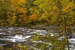 Otoño, río de Tellico, N-F cherokee imagen de archivo libre de regalías