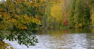 Otoño Reflexión de árboles en agua almacen de video