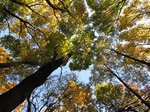 Otoño ruso del bosque Fotos de archivo libres de regalías