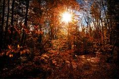 Otoño soleado Foto de archivo libre de regalías