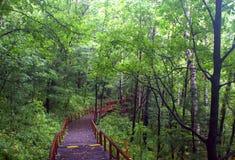 Otoño temprano el bosque primitivo Foto de archivo libre de regalías
