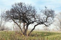 Otoño Un árbol con las ramas desnudas fotos de archivo