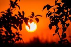Otoño, una puesta del sol ardiente en un bosque de hojas caducas Fotografía de archivo