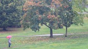 Otoño urbano 4K del árbol y de la lluvia metrajes