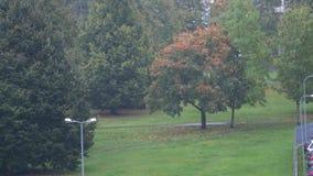 Otoño urbano 4K del árbol y de la lluvia almacen de metraje de vídeo