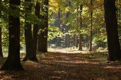 Otoño woods_3 Foto de archivo libre de regalías