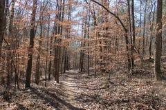 Otoño y el día soleado agradable del bosque a correr Foto de archivo