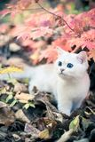 Otoño y gatito Imagen de archivo