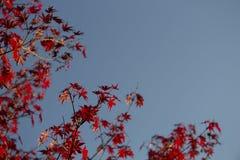 Otoño y un cielo azul Imagen de archivo libre de regalías