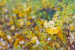 Oto?o Arbustos y hojas amarillas Fondo borroso hermoso de la naturaleza Profundidad del campo baja Imagen entonada Copie el espac fotos de archivo