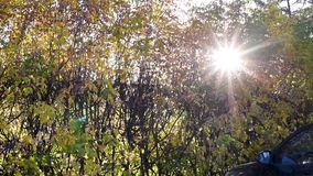 Oto?o El sol brilla rayos asteroides a través de las hojas de otoño en el d3ia almacen de video