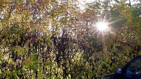 Oto?o El sol brilla rayos asteroides a trav?s de las hojas de oto?o en el d3ia metrajes
