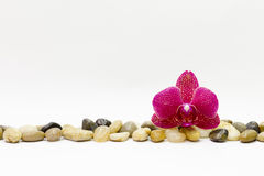Otoczak i orchidea Fotografia Royalty Free